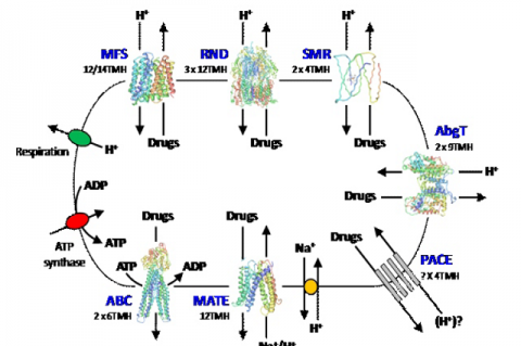 Schematic illustration for the energisation and structural organisation of seven distinct families of multidrug efflux protein found in bacteria