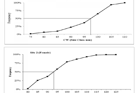Estimation of percent of mature females mud crab (S. serrata) as a function of CW (50%) of cumulative frequency at 97.5 mm from site 1 and 94.00mm from site 2.