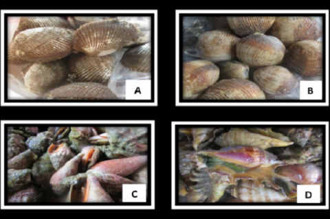 Selected mollusks collected from Guang-guang