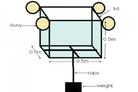 Floating cage used in the exposure of copepods and rabbitfish (S. guttatus) larvae to low