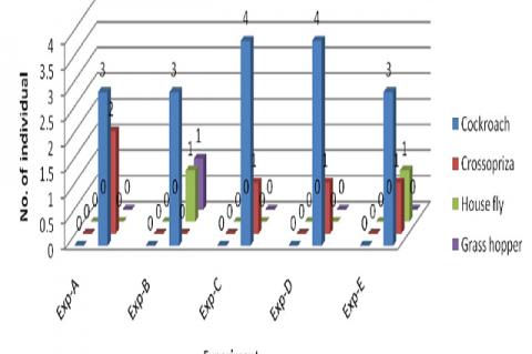 Figure shoeing prey preference by Heteropoda venotoria