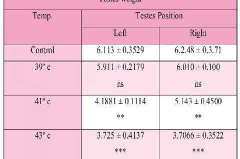 Testes  weight (mean ± SD)