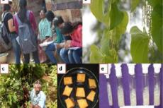 Field and lab work on experimental plants, a) Collection of medicinal values, b) Dioscorea oppositifolia, c) Collection of tubers, d) Processing of tubers of D. esculenta, e) Microbial strains
