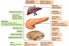 Molecular Mechanism in diabetes with possible targets for therapy